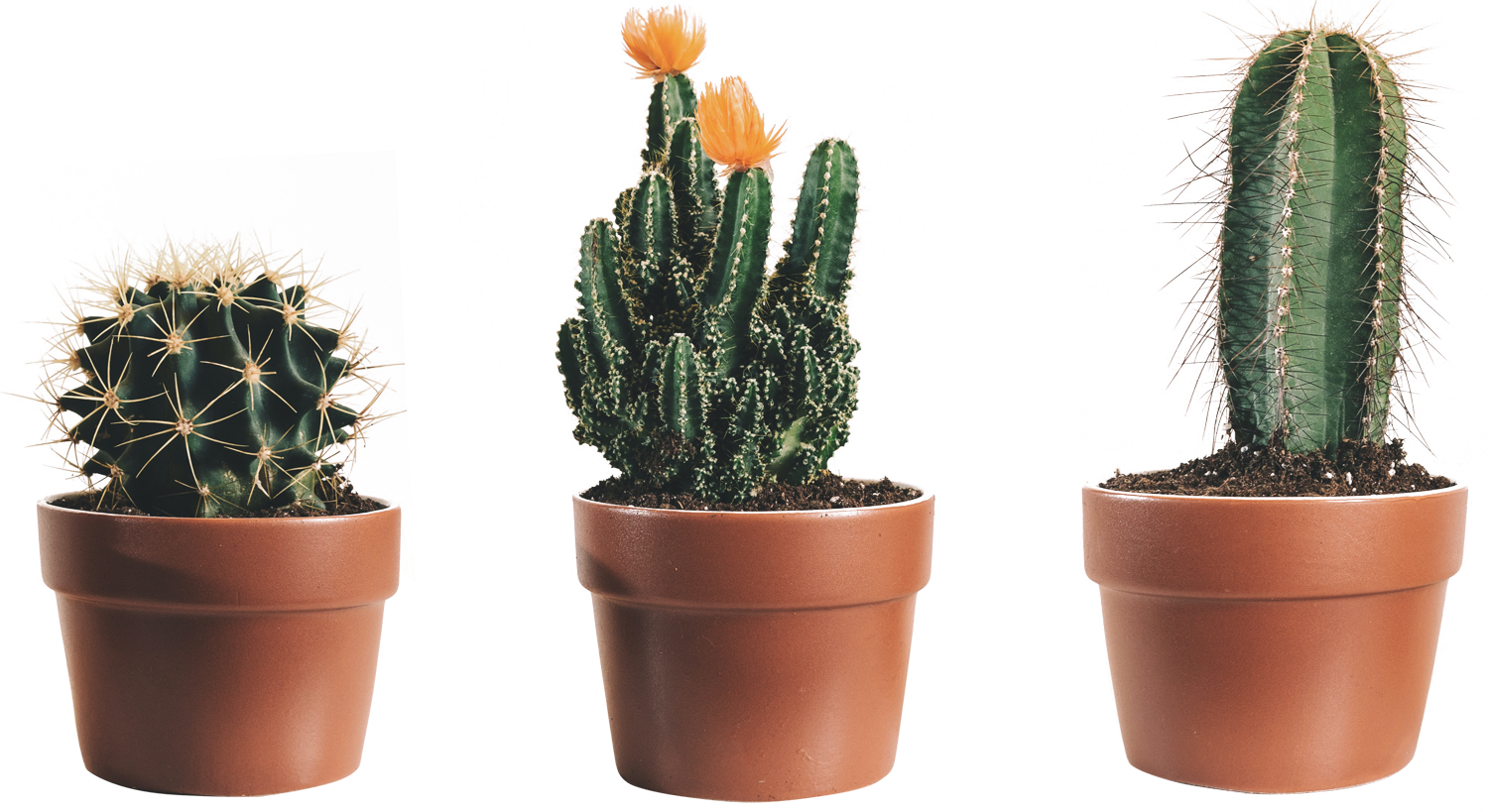 three-potted-cactus-2